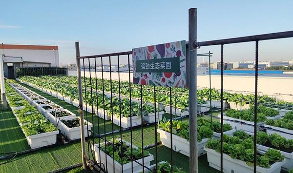强劲生态菜园
