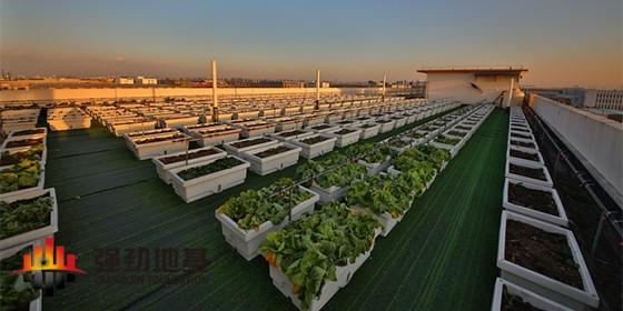 上海一家公司在厂房顶种了600盆蔬菜,日产50斤发给员工当福利